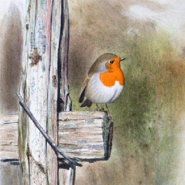 Lars Jonsson – En mästare på att måla fåglar!