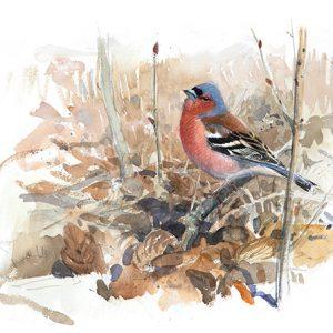 Fågelsång (Bofink)