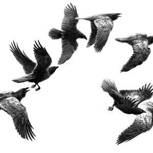 Flyglekar (Korp)